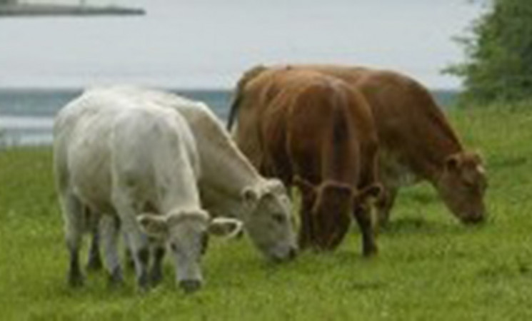 Agreement has been reached with the Egyptian authorities to enable the importation of Irish cattle.